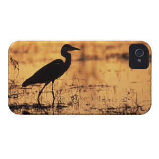 Africa, Botswana, Moremi Game Reserve, iPhone 4 Covers
