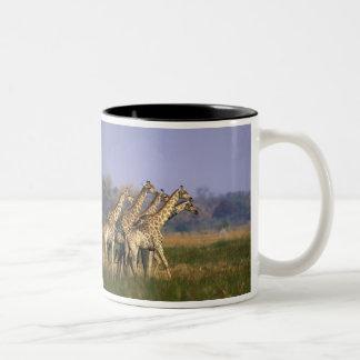Africa, Botswana, Moremi Game Reserve, Herd of Mug