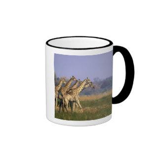 Africa, Botswana, Moremi Game Reserve, Herd of Mugs