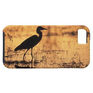 Africa, Botswana, Moremi Game Reserve, iPhone SE/5/5s Case