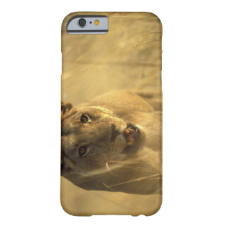 Africa, Botswana, Moremi Game Reserve, Lioness Barely There iPhone 6 Case