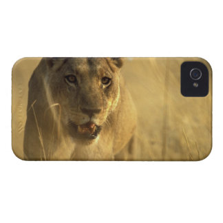 Africa, Botswana, Moremi Game Reserve, Lioness Case-Mate iPhone 4 Cases