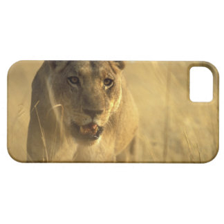 Africa, Botswana, Moremi Game Reserve, Lioness iPhone SE/5/5s Case