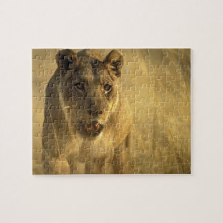 Africa, Botswana, Moremi Game Reserve, Lioness Puzzle