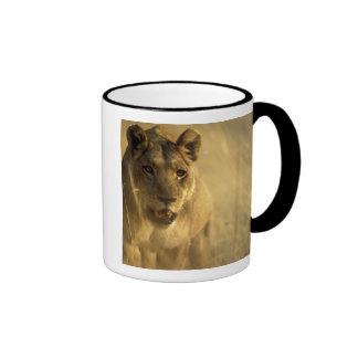 Africa, Botswana, Moremi Game Reserve, Lioness Ringer Mug
