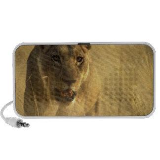 Africa, Botswana, Moremi Game Reserve, Lioness Speaker System