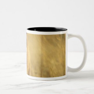 Africa, Botswana, Moremi Game Reserve, Lioness Two-Tone Coffee Mug