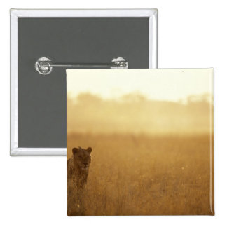 Africa Botswana Moremi Game Reserve Male Lion Pins