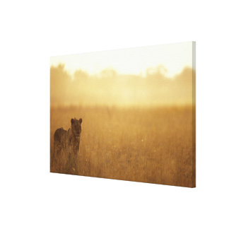 Africa, Botswana, Moremi Game Reserve, Male Lion Canvas Print