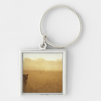 Africa, Botswana, Moremi Game Reserve, Male Lion Keychain