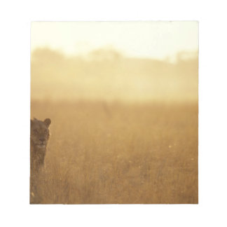 Africa, Botswana, Moremi Game Reserve, Male Lion Notepad