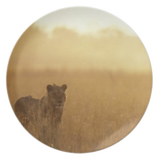 Africa, Botswana, Moremi Game Reserve, Male Lion Plates