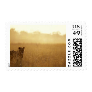 Africa, Botswana, Moremi Game Reserve, Male Lion Stamps