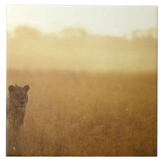 Africa, Botswana, Moremi Game Reserve, Male Lion Tile