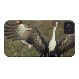Africa. Botswana, Moremi Game Reserve, Wattled iPhone 4 Case-Mate Cases