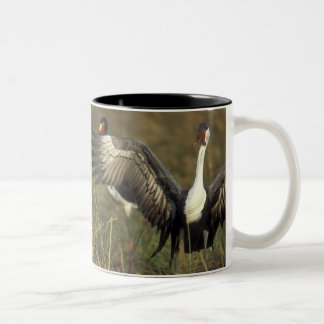 Africa. Botswana, Moremi Game Reserve, Wattled Coffee Mugs