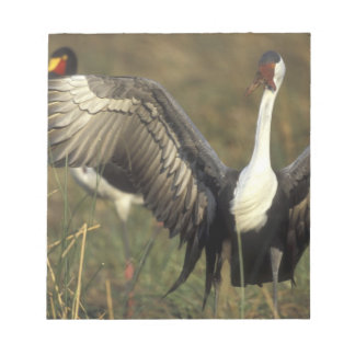 Africa. Botswana, Moremi Game Reserve, Wattled Notepad