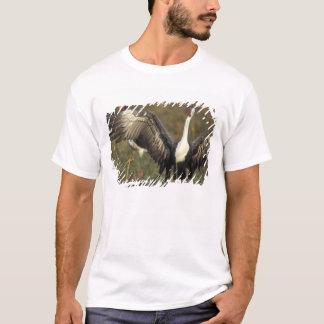 Africa. Botswana, Moremi Game Reserve, Wattled T-Shirt