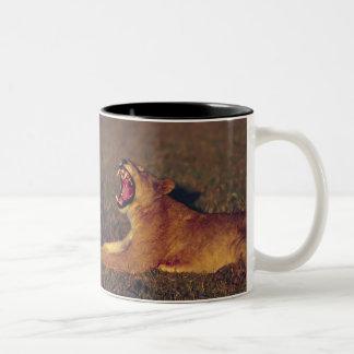 Africa,Botswana,Moremi Wildlife Reserve. Lioness Two-Tone Coffee Mug