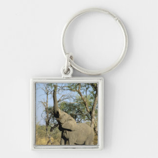 Africa, Botswana, Okavango Delta. African 2 Keychain