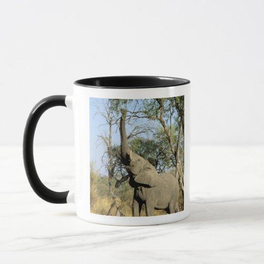 Africa, Botswana, Okavango Delta. African 2 Mug