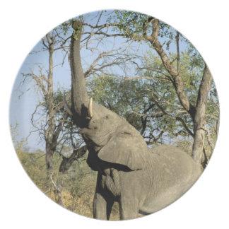 Africa, Botswana, Okavango Delta. African 2 Plate