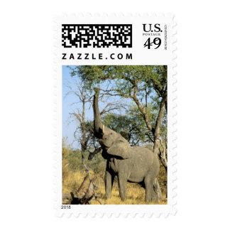 Africa, Botswana, Okavango Delta. African 2 Stamp