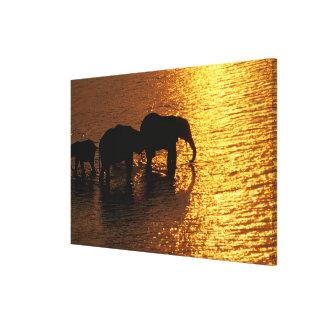 Africa, Botswana, Okavango Delta. African Canvas Print