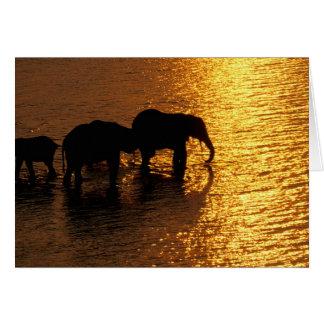 Africa Botswana Okavango Delta African Greeting Cards