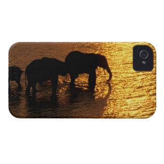 Africa, Botswana, Okavango Delta. African iPhone 4 Case-Mate Cases
