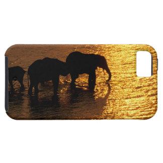 Africa, Botswana, Okavango Delta. African iPhone SE/5/5s Case