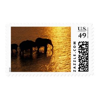 Africa, Botswana, Okavango Delta. African Stamps