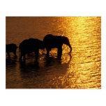 Africa, Botswana, Okavango Delta. African Post Card