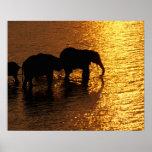 Africa, Botswana, Okavango Delta. African Print