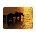 Africa, Botswana, Okavango Delta. African Rectangular Photo Magnet