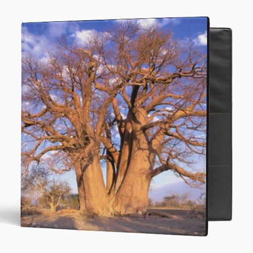 Africa, Botswana, Okavango Delta. Baobab Binders
