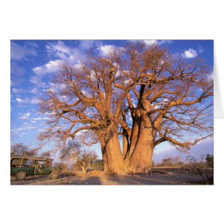 Africa Botswana Okavango Delta Baobab Cards