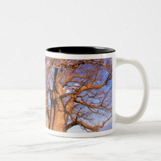 Africa, Botswana, Okavango Delta. Baobab Two-Tone Coffee Mug