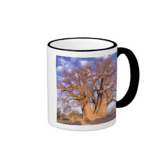 Africa, Botswana, Okavango Delta. Baobab Mug