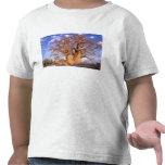 Africa, Botswana, Okavango Delta. Baobab Tshirts