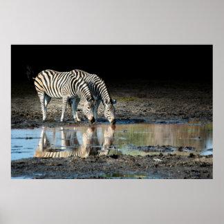 Africa,Botswana, Okavango Delta, Davison Camp Poster