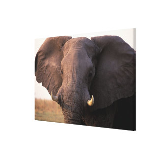 Africa, Botswana, Okavango Delta. Elephant Canvas Print