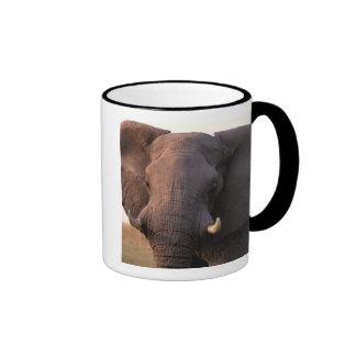 Africa, Botswana, Okavango Delta. Elephant Ringer Coffee Mug