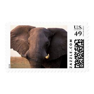 Africa, Botswana, Okavango Delta. Elephant Postage