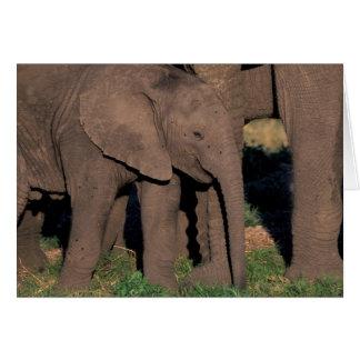Africa Botswana Okavango Delta Elephants Card