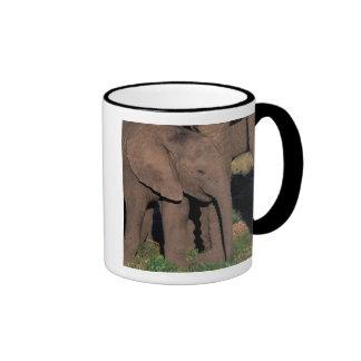 Africa, Botswana, Okavango Delta. Elephants Ringer Coffee Mug