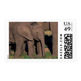 Africa, Botswana, Okavango Delta. Elephants Stamp