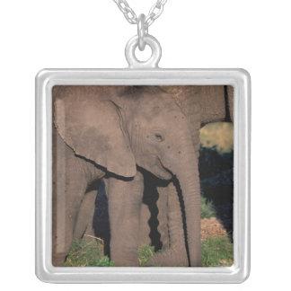 Africa, Botswana, Okavango Delta. Elephants Square Pendant Necklace