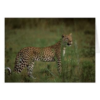 Africa Botswana Okavango Delta Leopard Cards