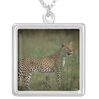 Africa, Botswana, Okavango Delta. Leopard Jewelry